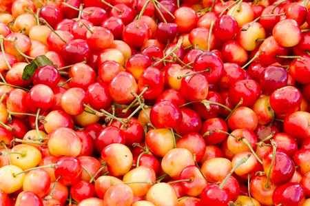 Colorful fresh Queen Anne cherries on display at the farmers market