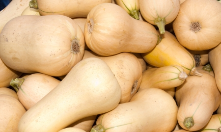 Fresh winter squash or butternut squash on display at the farmers market Stock Photo