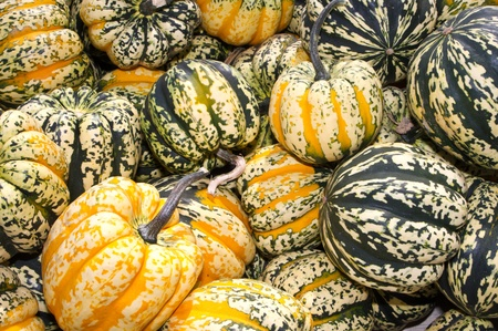 Colorful acorn or winter squash on display at the farmers market Banco de Imagens
