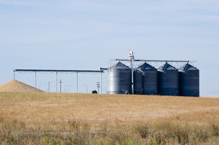 grainery: Grain being dumped on ground as excess to storage capacity with silos