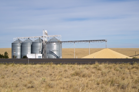 Grain being dumped on ground from silos as excess to storage capacity Stock Photo