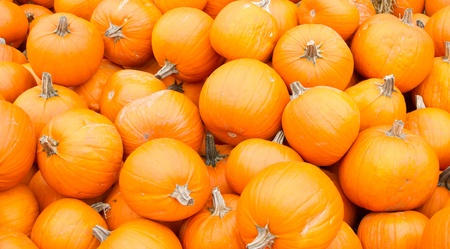 Bright orange pumpkins on display at the farmers market photo