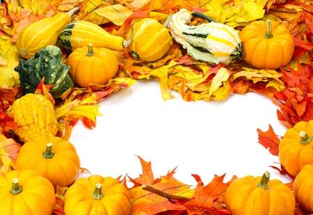 enclosing: Autunno accordo con zucche zucche e foglie luminose che racchiudono lo spazio