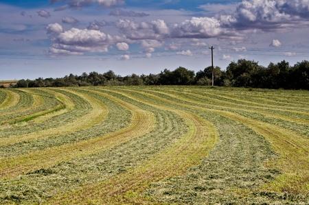 hay field: Appena campo di fieno falciato sotto un cielo drammatico