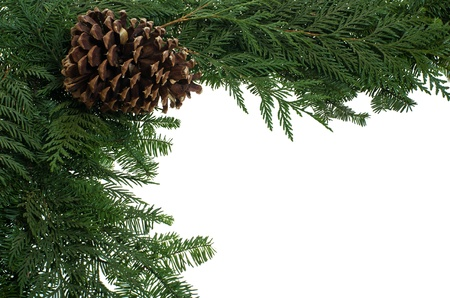 A decorative border of pine boughs isolated on white Stock Photo - 12305531