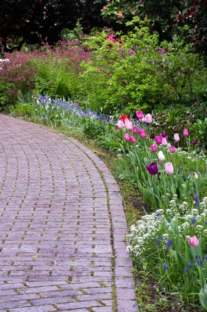 A winding garden path of red pavers with tulips blooming photo