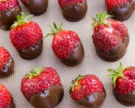 chocolate covered strawberries: Una bandeja de fresas cubiertas de chocolate