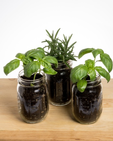 Three herb plants in mason jars on wooden table Stock fotó