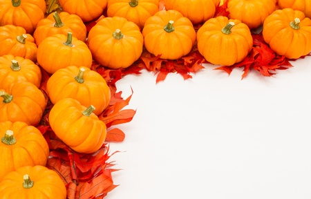 Fall border of small pumpkins on red leaves