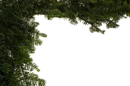 A Christmas border of live greens or branches Stock Photo - 14608046
