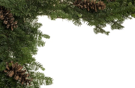 Christmas border of pine cones and live fresh greens Stock Photo - 14608053