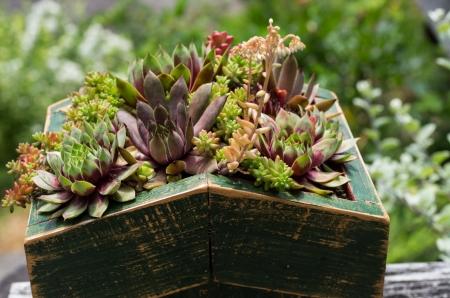 Dachbegrünung mit Sedum-Pflanzen für nachhaltiges Bauen verwendet Standard-Bild