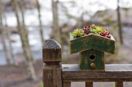 Bird house on railing with planted sedum green roof