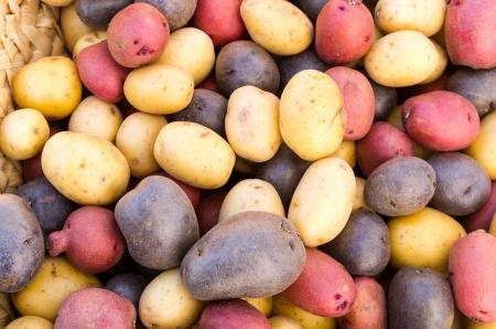 Fresh papas de colores rojo, blanco, azul en exhibición en el mercado