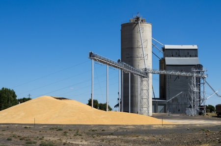 A grain storage facility with piles of grain on the ground