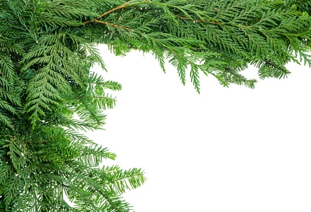 religious event: A holiday border from evergreen branches Stock Photo