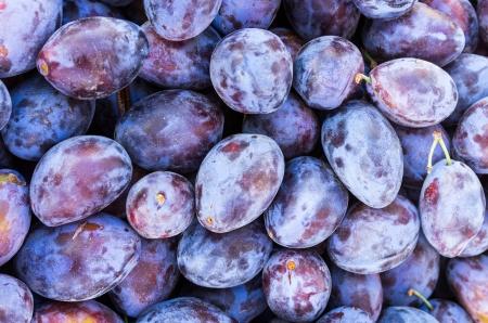 Display of purple prune plums at the farmers market 版權商用圖片