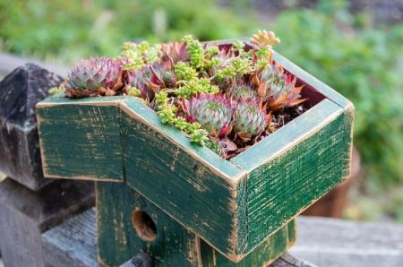Sedum plantes utilis�es pour faire un toit vert Banque d'images