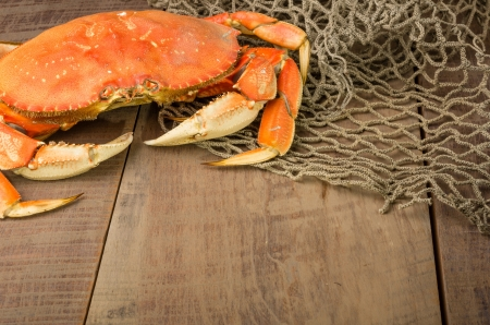 A Dungeness crab ready to be cooked with a net photo