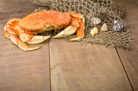 Dungeness crab and net with seashells photo