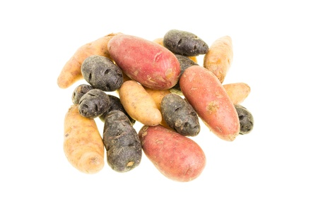 fingerling: Colorful fingerling potatoes isolated on white Stock Photo