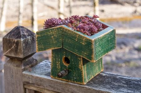 Maison d'oiseau avec toit vie des plantes sedum Banque d'images