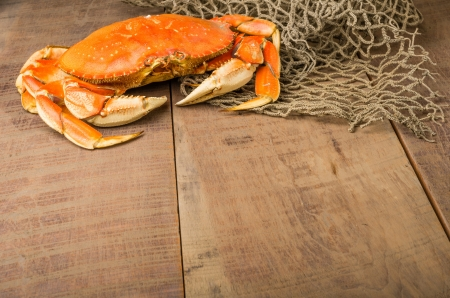dungeness: A Dungeness crab ready to be cooked Stock Photo