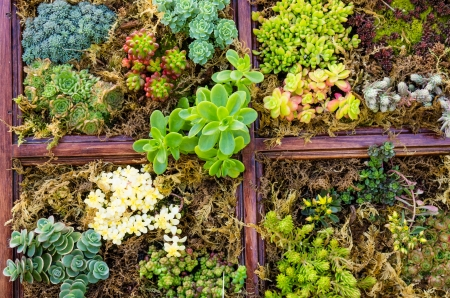 Sedum und sempervivium Pflanzen für Dachbegrünung Anwendungen Standard-Bild