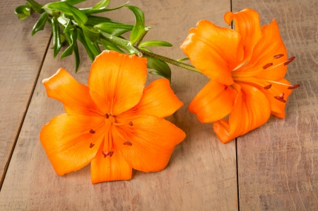 Orange lily flowers in full bloom on a wooden table 版權商用圖片