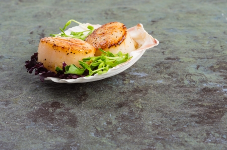 Fresh sea scallops seared and served on a shell Stock fotó