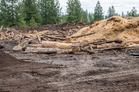 A logging site in the forest with logs and debris Stock fotó