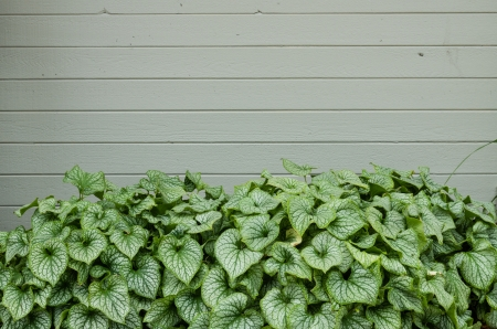 signboard: Green plants and a blank wall for use as background or as signage