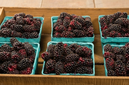 A wooden box of freshly picked Marionberries