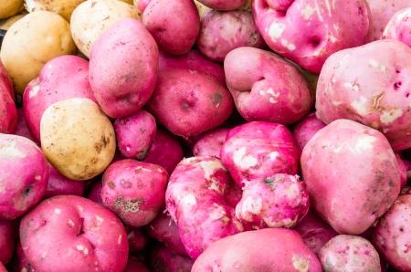 赤いジャガイモの農民市場で一括表示新鮮です 写真素材 - 22636543