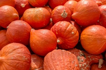Orange hubbard squash on display at the farmers market