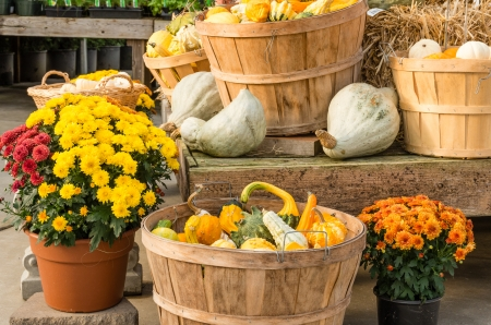 Fall harvest display with gourds squash and flowers