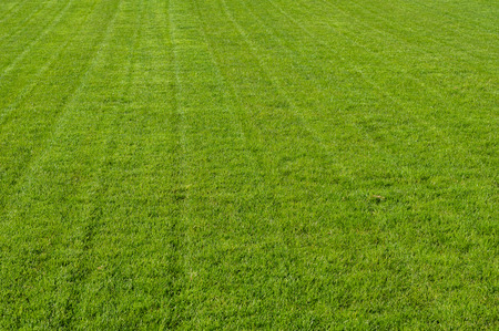 cut grass: Freshly mown grass or turf in a park for recreation