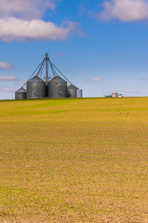 grainery: Group of grain storage silos in a rural area farm