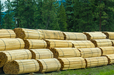 Fence posts stacked in bundles at a lumber mill
