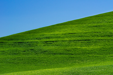 A bright fresh green grass pasture with a blue sky