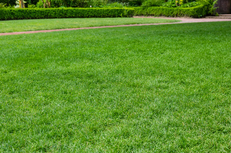 Lawn in a large garden with path
