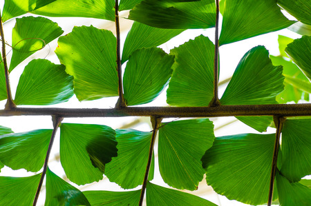 A palm leaf backlit by the sun