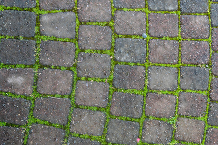hardscape: Grooved brick patio or walkway with moss