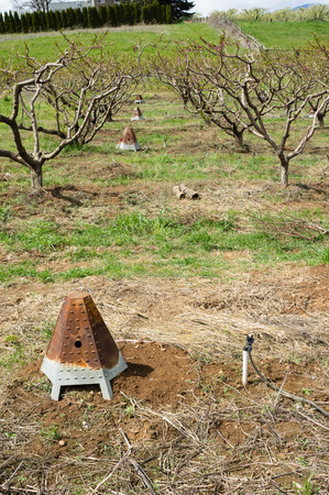 Metal heaters in an orchard used for frost protection