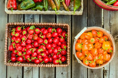 chiles picantes: Chiles rojos y naranjas en canasta de mimbre