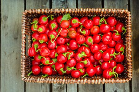 chiles picantes: Cesta de mimbre mostrar chiles rojos Foto de archivo