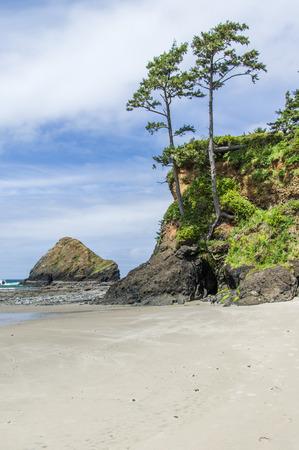 rocky point: Spiaggia di sabbia sulla costa dell'Oregon con alberi e punta rocciosa
