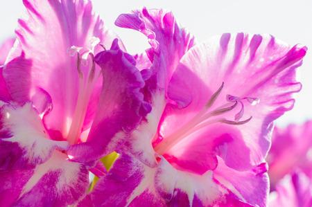 배경에 대 한 꽃의 높은 키 백라이트 이미지