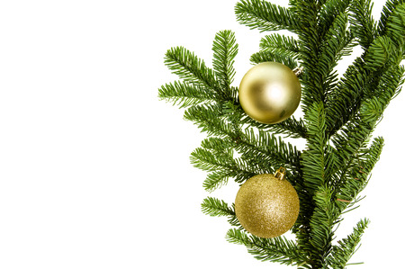 bough: Noble fir bough with gold ornaments isolated