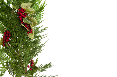 boughs: Side border of cedar boughs and holly with berries